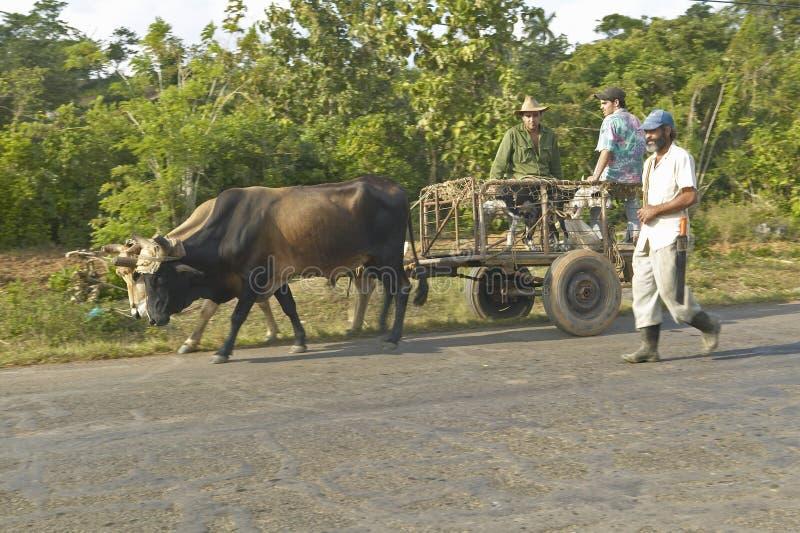 Drie mensen reizen met een paard getrokken kar door platteland van centraal Cuba royalty-vrije stock afbeelding