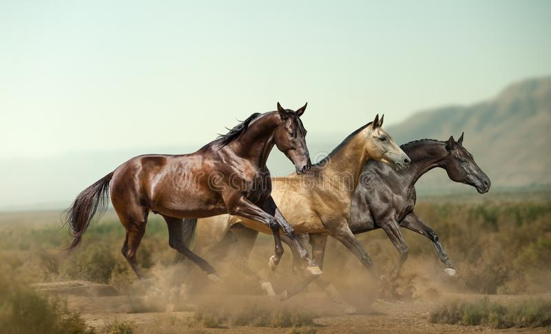 Drie mooie paarden in prairies stock afbeelding