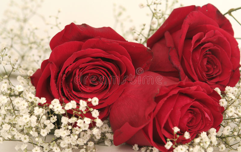 Drie mooie rode rozen royalty-vrije stock fotografie