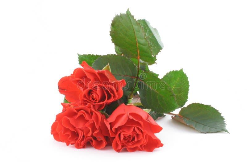 Drie mooie rode rozen op wit royalty-vrije stock afbeeldingen