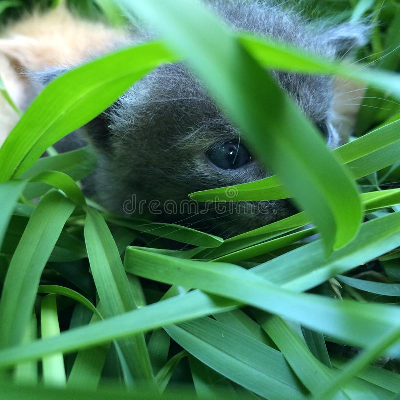 Drie nieuwe babykatjes royalty-vrije stock foto