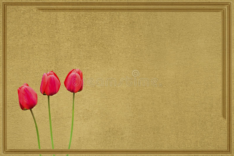 Drie ontworpen tulpen stock foto