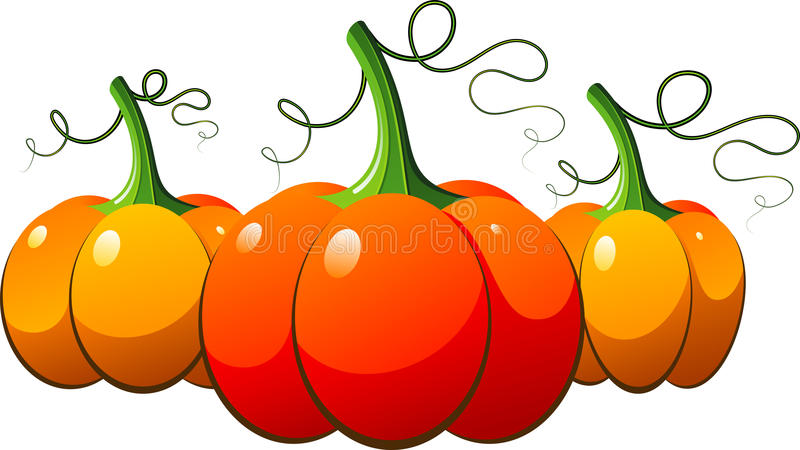 Drie oranje pompoenen over wit vector illustratie