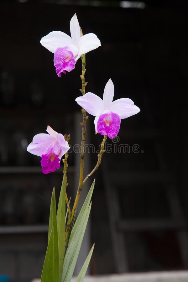 Drie orchideeënbloemen stock foto's