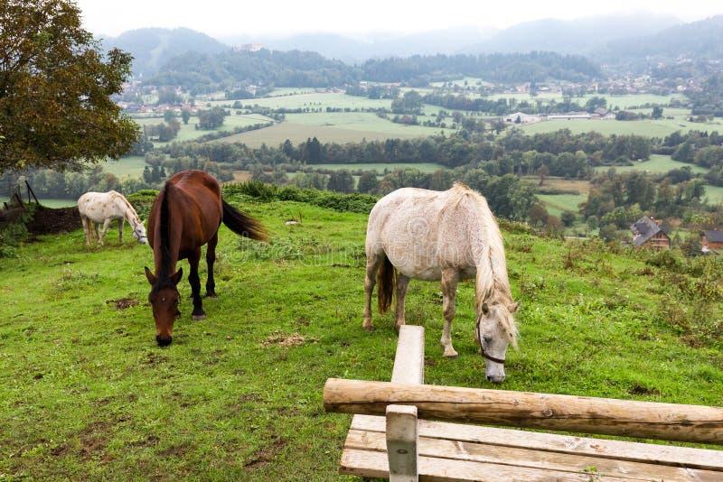 Drie paarden die Zasip-de mening van de dorpsherfst, touri van Slovenië weiden stock afbeeldingen