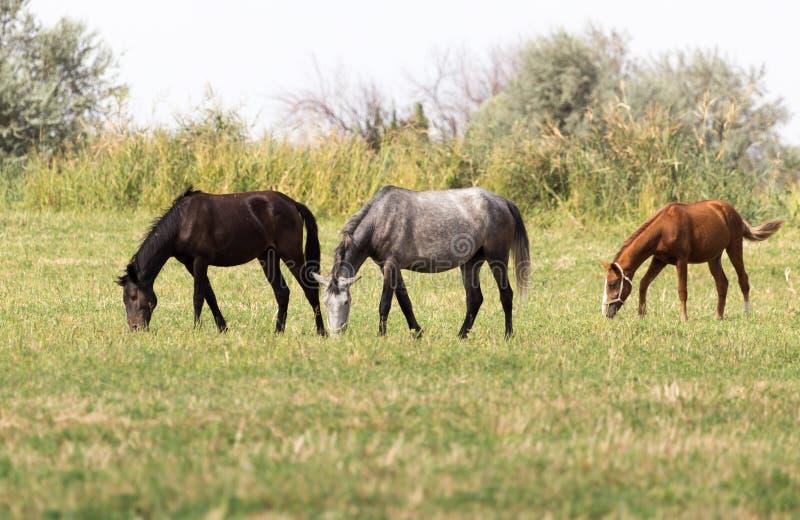Drie paarden in een weiland in aard royalty-vrije stock afbeeldingen