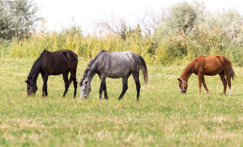Drie paarden in een weiland in aard stock foto's