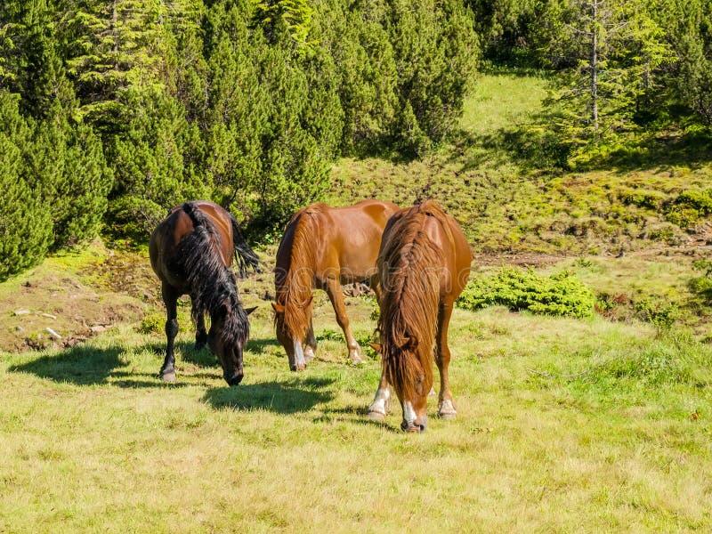 Drie paarden op een bergweiland royalty-vrije stock afbeeldingen