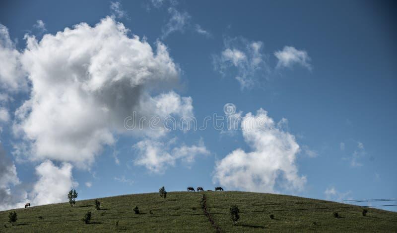 Drie paarden weidden onder de wolken stock fotografie