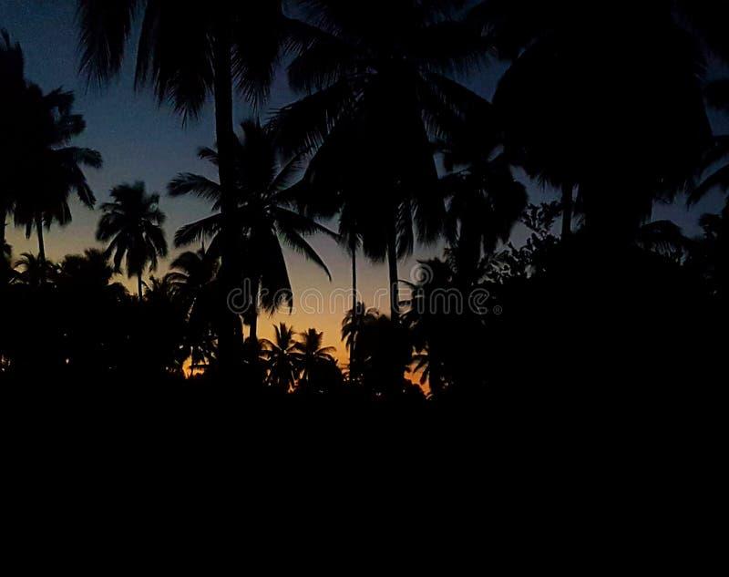 Drie palmen royalty-vrije stock foto