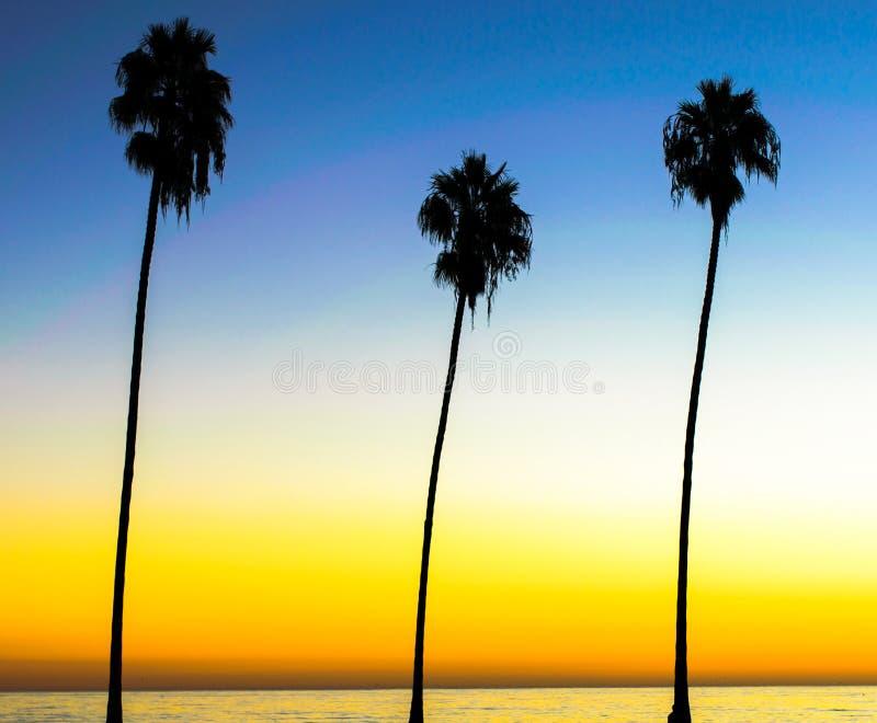 Drie palmen op de kust van de oceaan royalty-vrije stock fotografie
