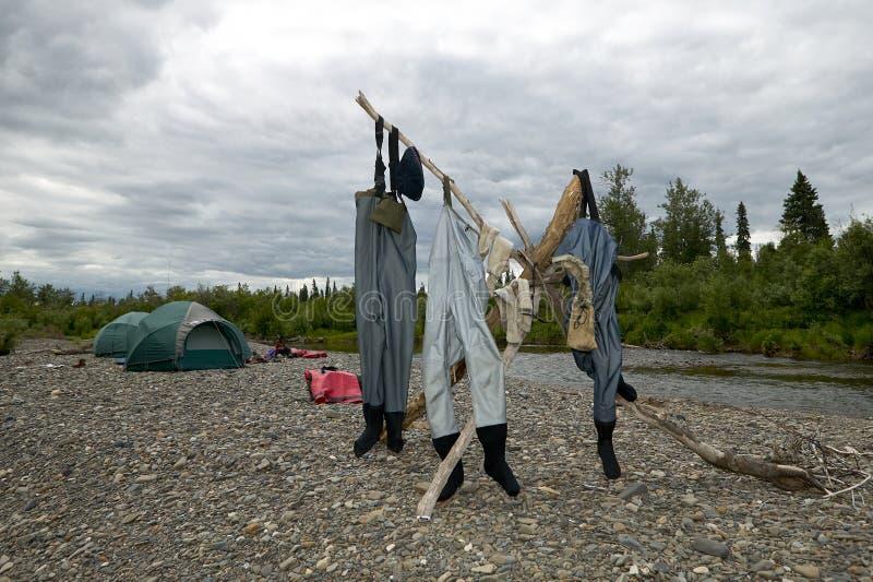 Drie paren waadvogels die uit hangen te drogen stock fotografie