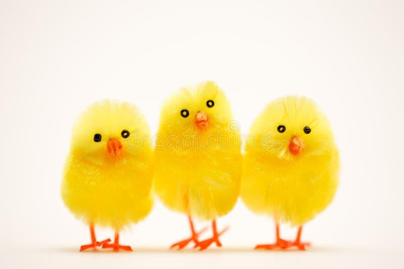 Drie Pasen kuikens sluiten omhoog royalty-vrije stock afbeeldingen