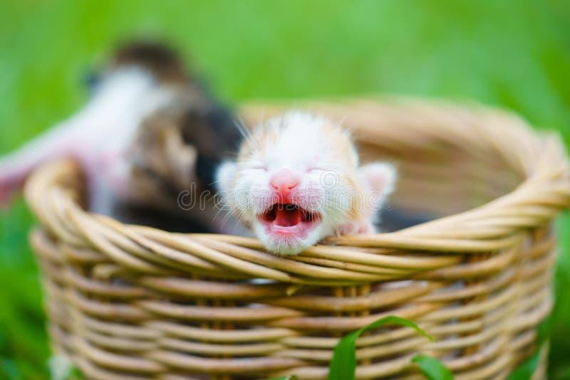 Drie pasgeboren katjes die in rieten mand op groen gras zitten stock fotografie