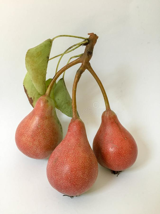 Drie peren met doorbladert en tak stock foto