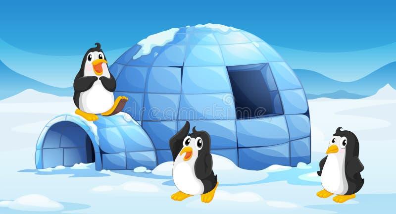 Drie pinguïnen dichtbij een iglo stock illustratie