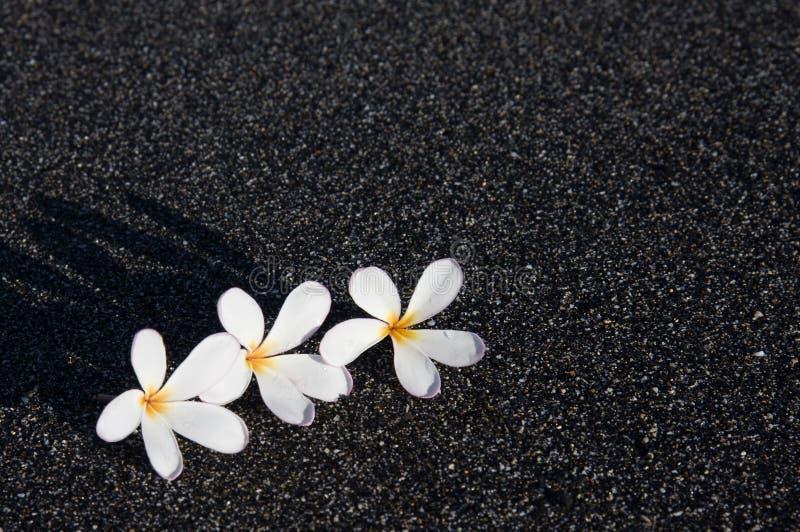 Drie Plumeria op Zwart Zand royalty-vrije stock afbeeldingen