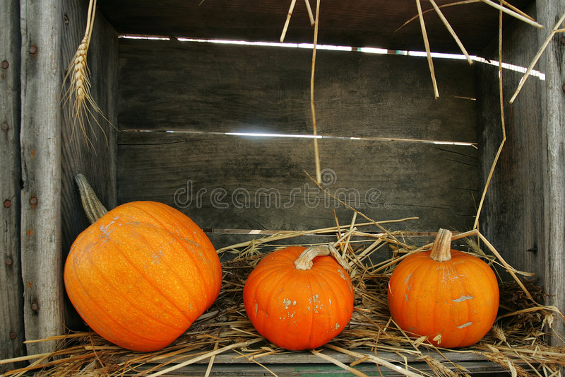 Download Drie Pompoenen stock afbeelding. Afbeelding bestaande uit sinaasappel - 287283