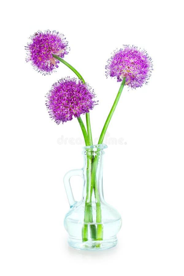 Drie purpere Alliumbloemen in een decoratieve fles royalty-vrije stock afbeelding