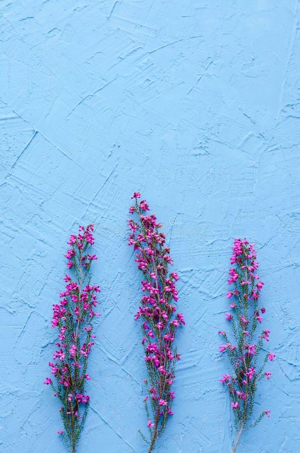 Drie purpere bloemen van heide op blauwe achtergrond Ruimte aan exemplaar stock afbeelding
