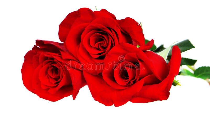Drie rode rozen stock foto