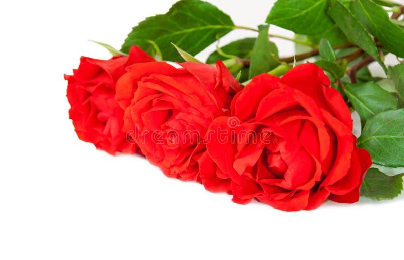 Drie rode rozen die op wit worden geïsoleerd royalty-vrije stock fotografie