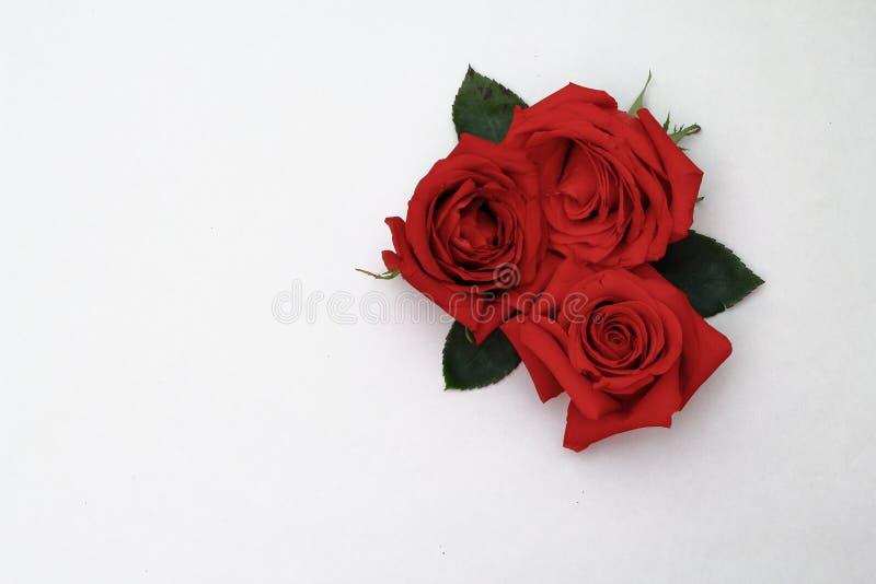 Drie rode rozen op een witte achtergrond royalty-vrije stock fotografie