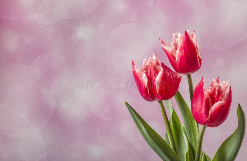 Drie rode tulpen op roze met exemplaarruimte stock foto