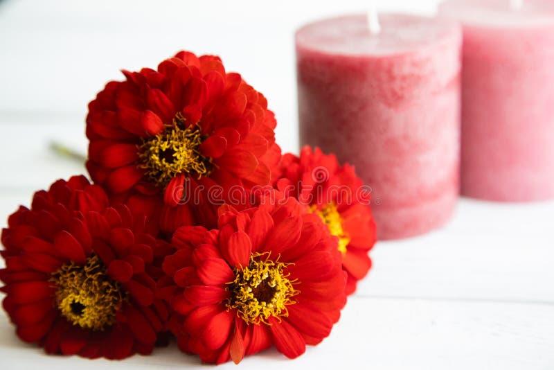 Drie rode zinnia-bloemen en roze kaarsen op de achtergrond liggen op een verouderde witte houten tafel Concept voor briefkaarten stock afbeelding
