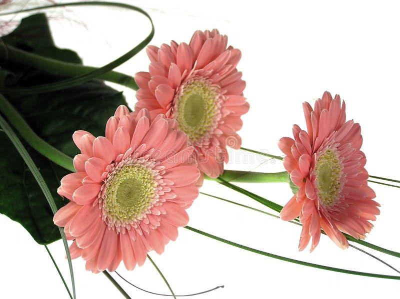 Drie roze bloemen stock afbeeldingen