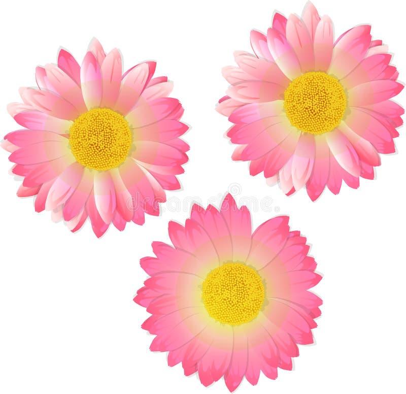 Drie roze bloemen Vector illustratie royalty-vrije stock fotografie