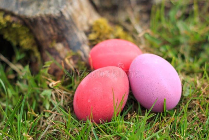 Drie roze en rode gekleurde traditionele paaseieren in het echte gras stock foto