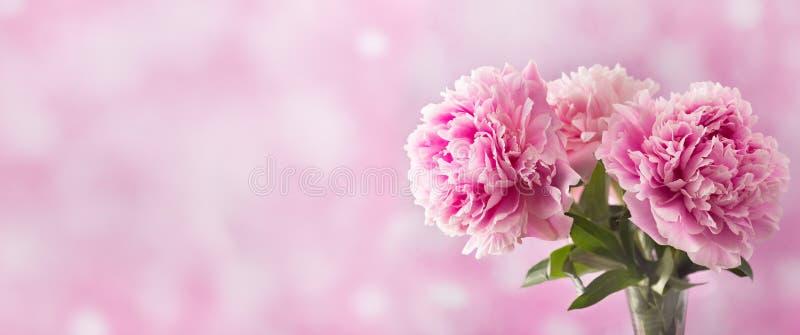 Drie roze pioenbloem op lichte achtergrond stock afbeeldingen