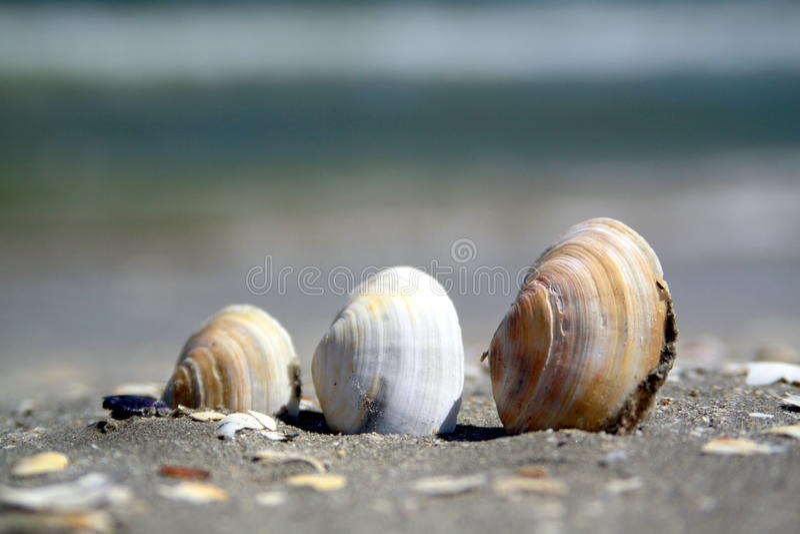 Drie shells op een strand stock afbeeldingen