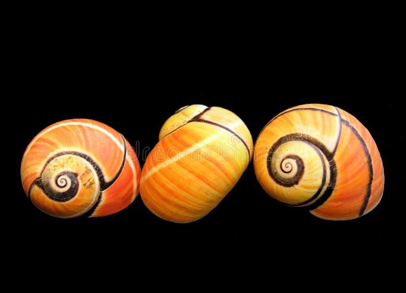 Drie slakken stock afbeelding