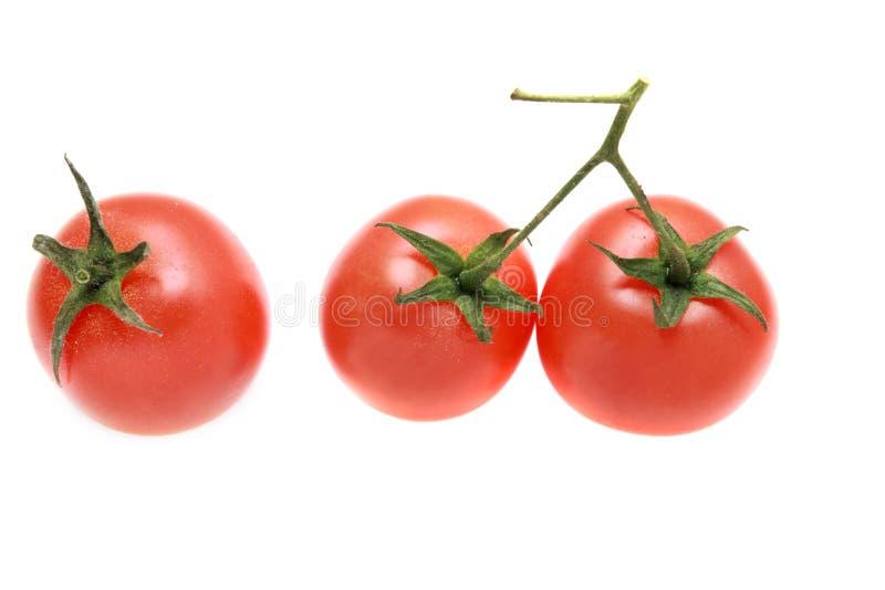 Drie tomaten op een geïsoleerde tak. stock foto