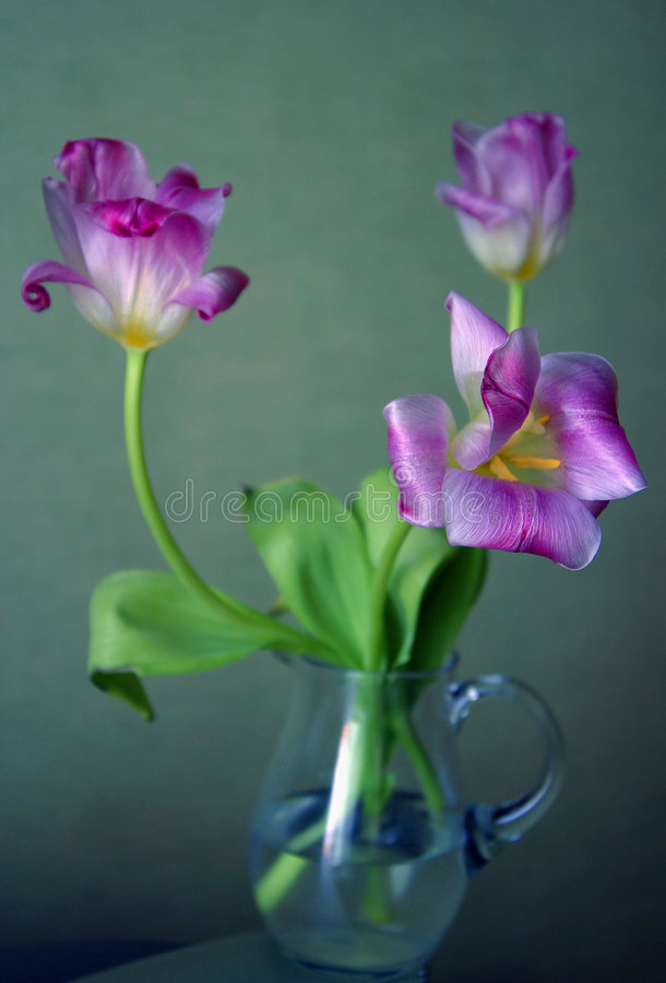 Drie tulpen royalty-vrije stock foto's