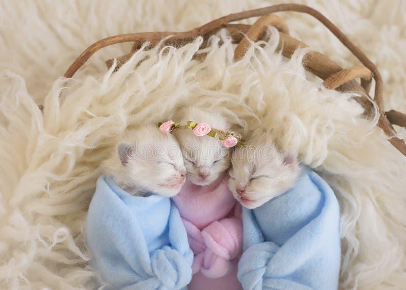 Drie uiterst kleine aanbiddelijke katjes in een mand stock fotografie