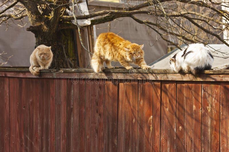 Drie verdwaalde katten stock foto