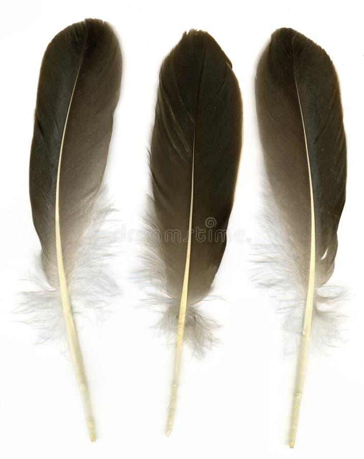 Drie veren