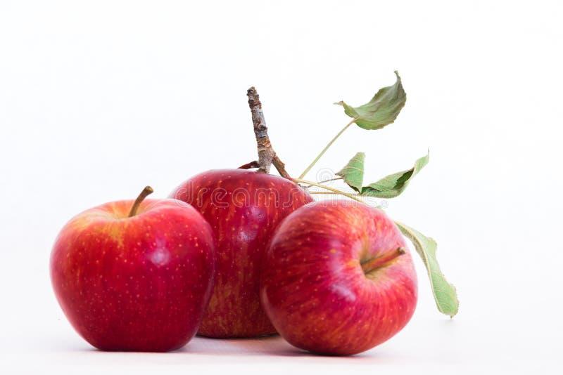 Drie verse natuurlijke organische Rode Erfgoed Heerlijke close-up van heerlijke appelen royalty-vrije stock afbeeldingen