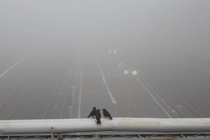 Drie vogelsraven beslissen waar te in de mist te vliegen royalty-vrije stock afbeelding