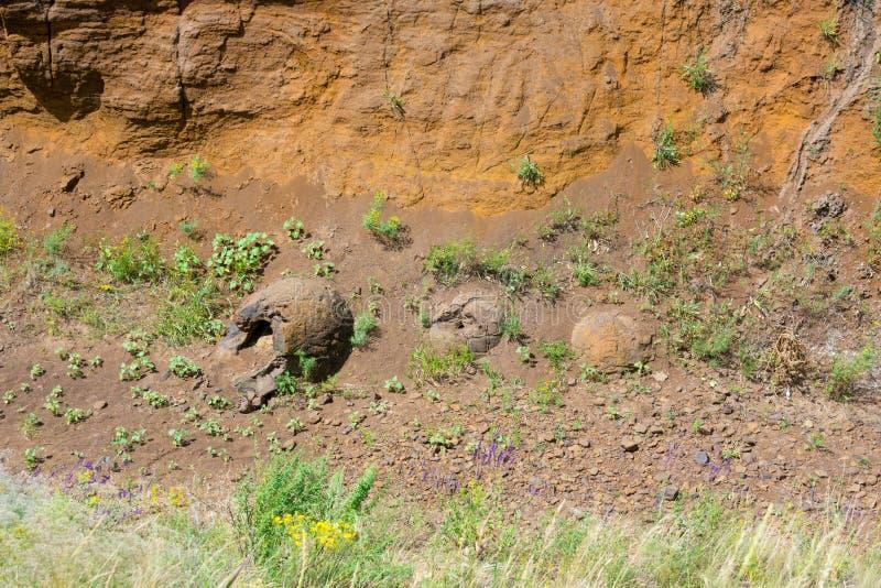 Drie vormen van onderwijs in ravijn-als dinosauruseieren zijn gevonden dichtbij het dorp van het Natte District van Olhovka Kotov royalty-vrije stock afbeeldingen