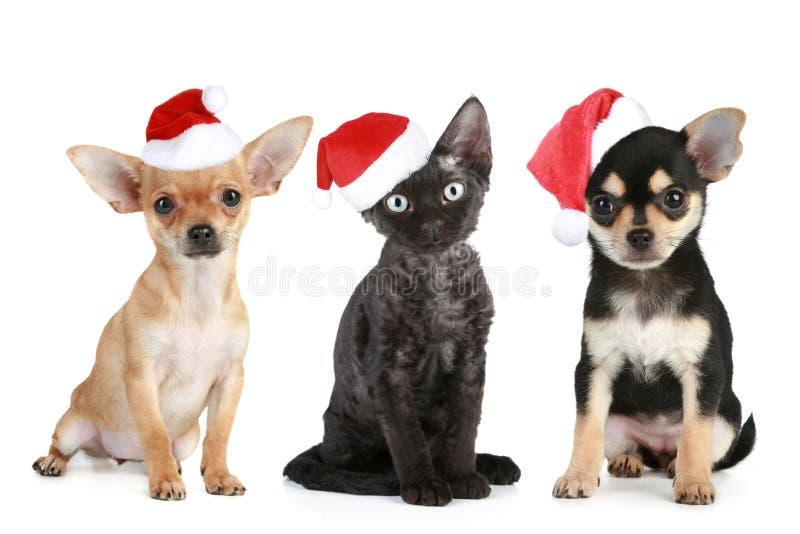 Drie vrienden in de kappen van de Kerstman stock foto