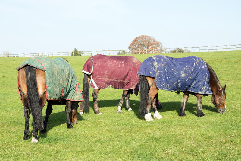 Drie weidende paarden stock afbeelding
