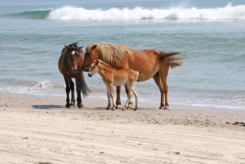 Drie wild paarden royalty-vrije stock foto