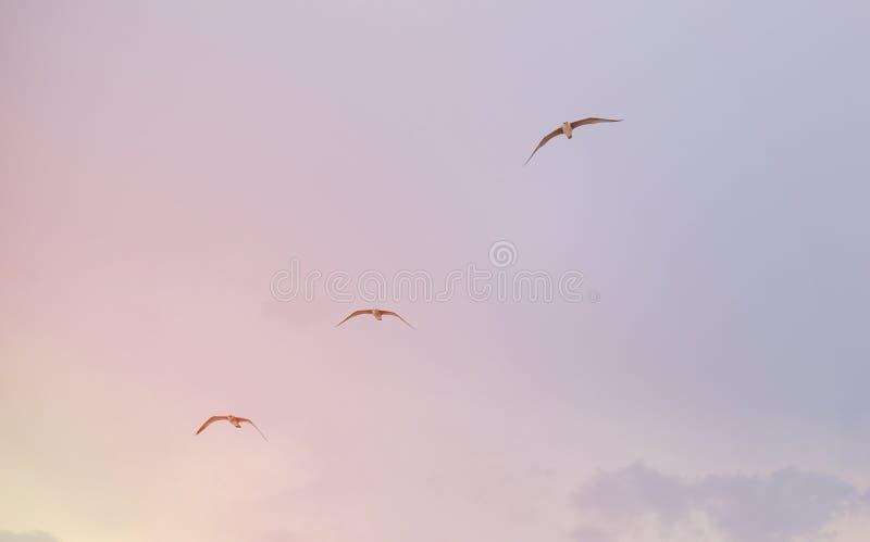 Drie zeemeeuwen die over het overzees vliegen stock foto