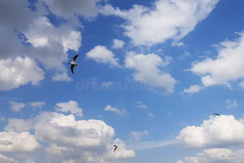 Drie zeemeeuwen op een de zomer bewolkte dag in de hemel vliegen in verschillende richtingen royalty-vrije stock afbeelding