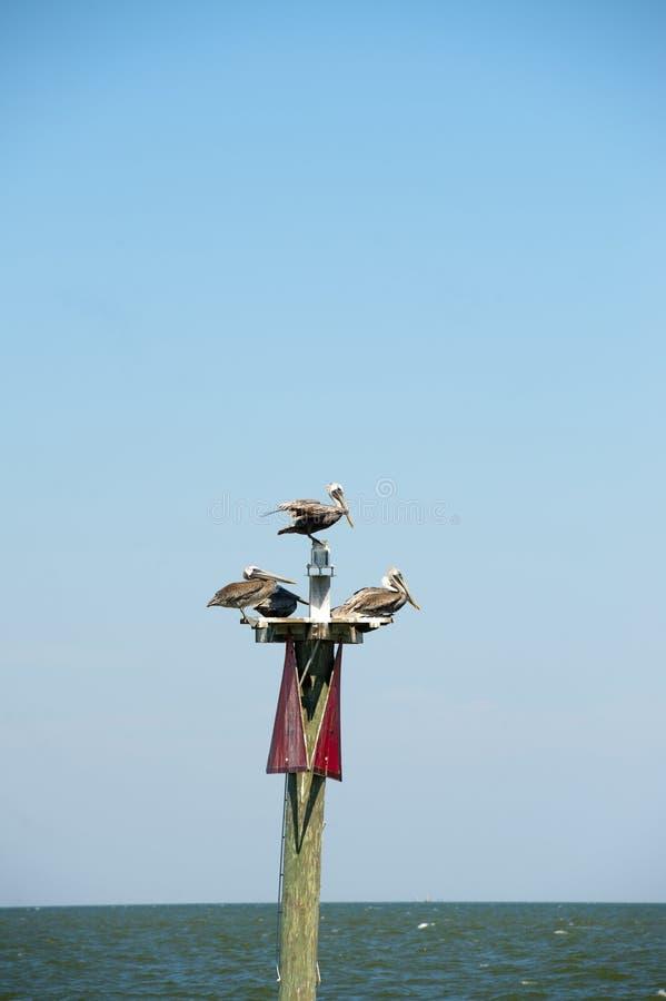 Drie zeemeeuwen zijn neergestreken op een boeiteller in Mobiel Baai Alabama stock foto