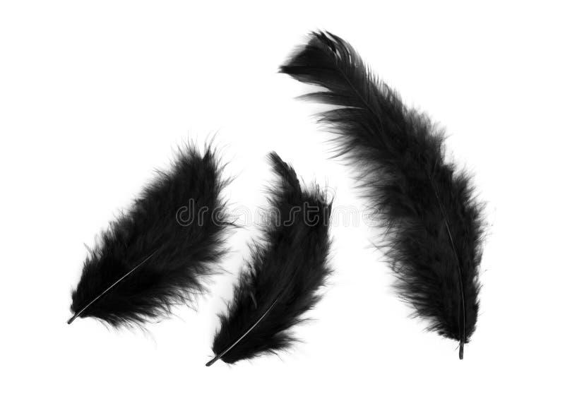 Drie zwarte veren royalty-vrije stock afbeeldingen